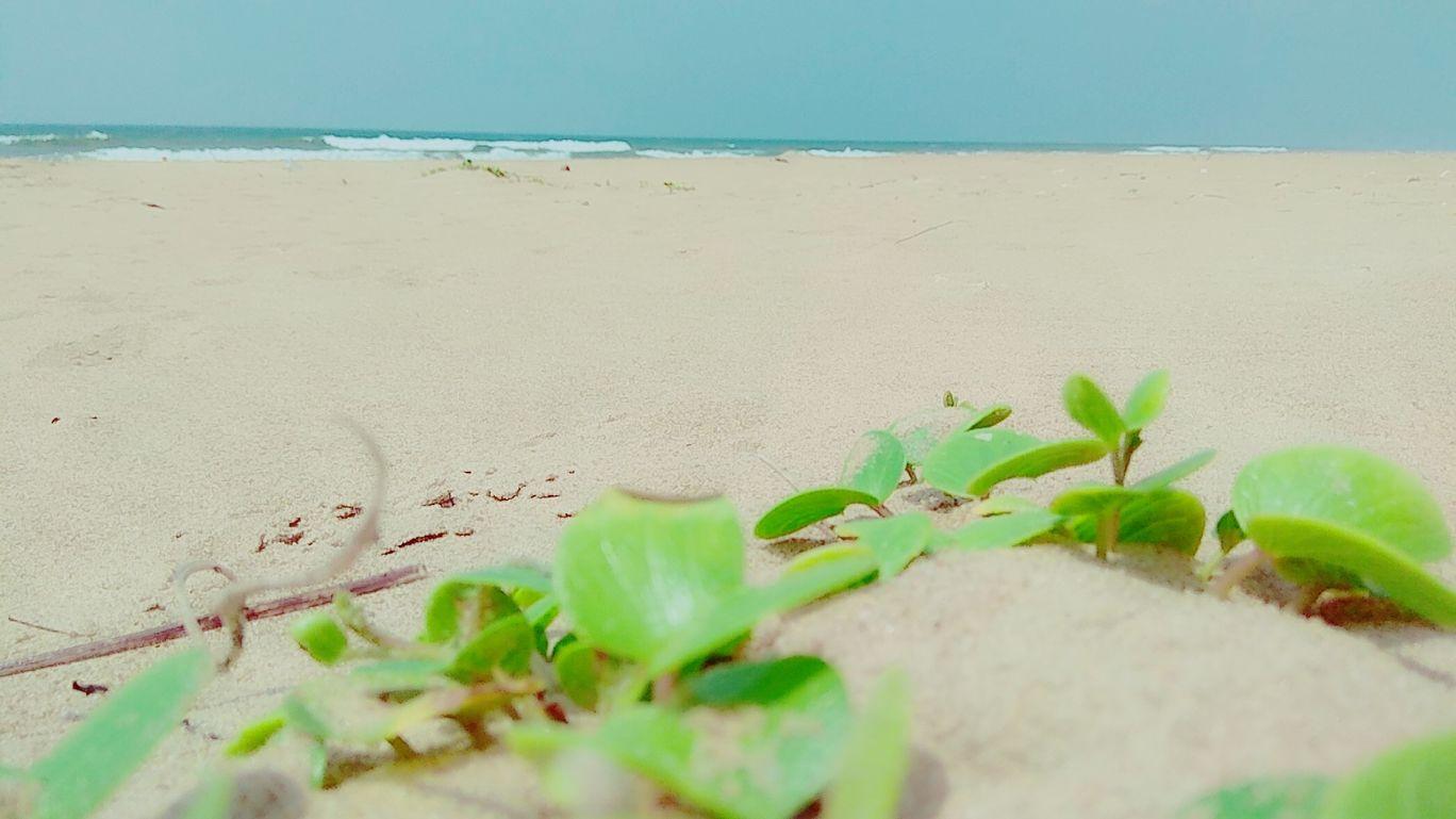 Photo of Orissa By Swarup Dey