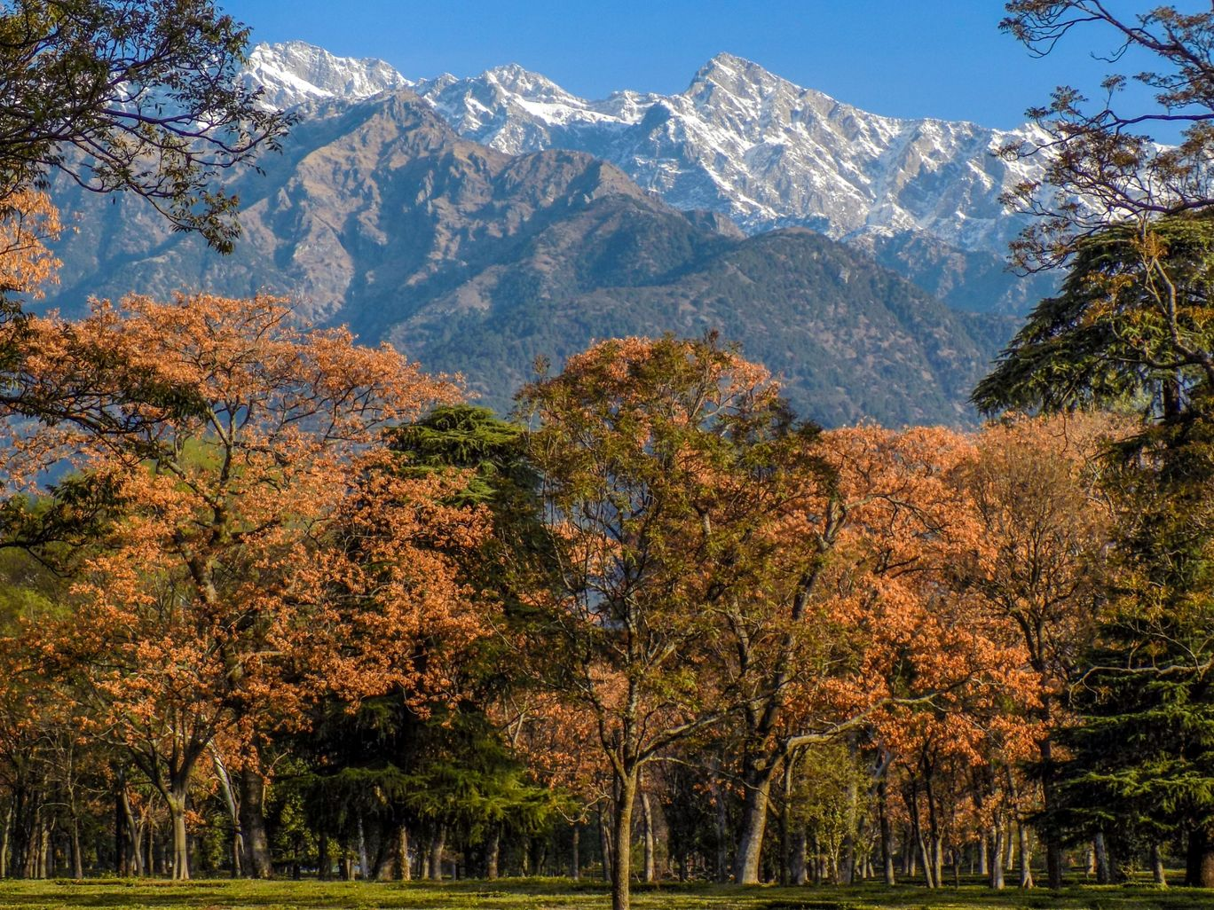 Photo of Palampur By Sandeep Kapoor