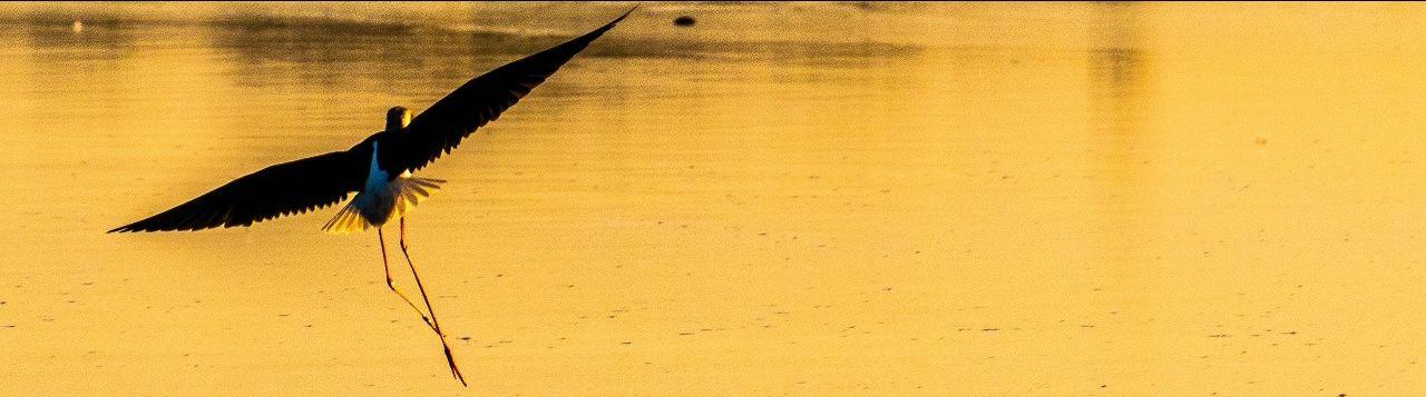 Photo of Jaipur By Er Dhruv Sharma