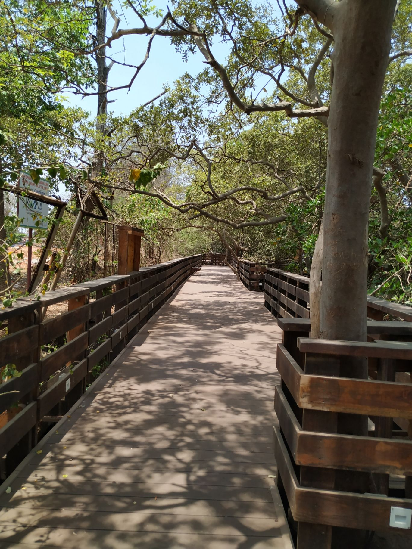 Photo of Mangrove Boardwalk By Astrida Mascarenhas