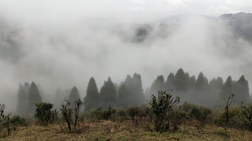 Photo of Sandakhphu By Kumaril Shivam