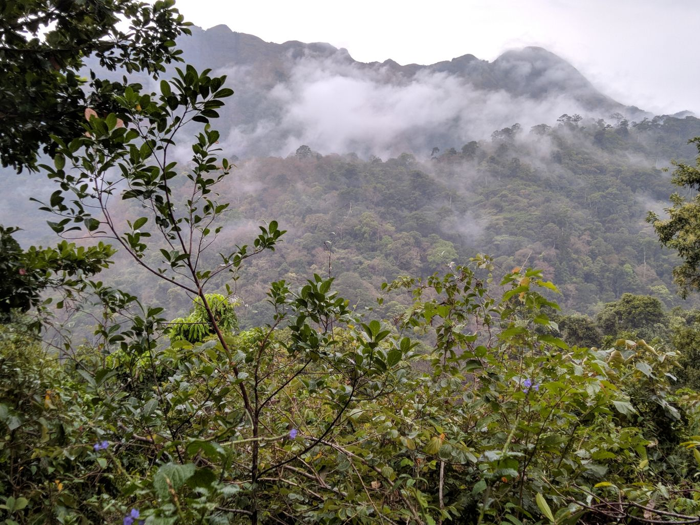 Photo of Ponmudi Hill Station By Nandhu PR