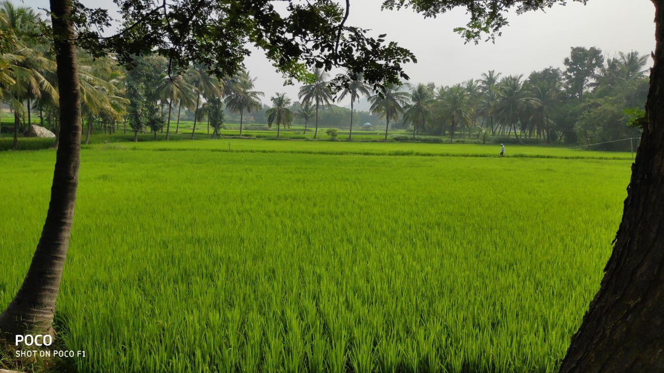 Photo of Somanathapura By chethan gowda