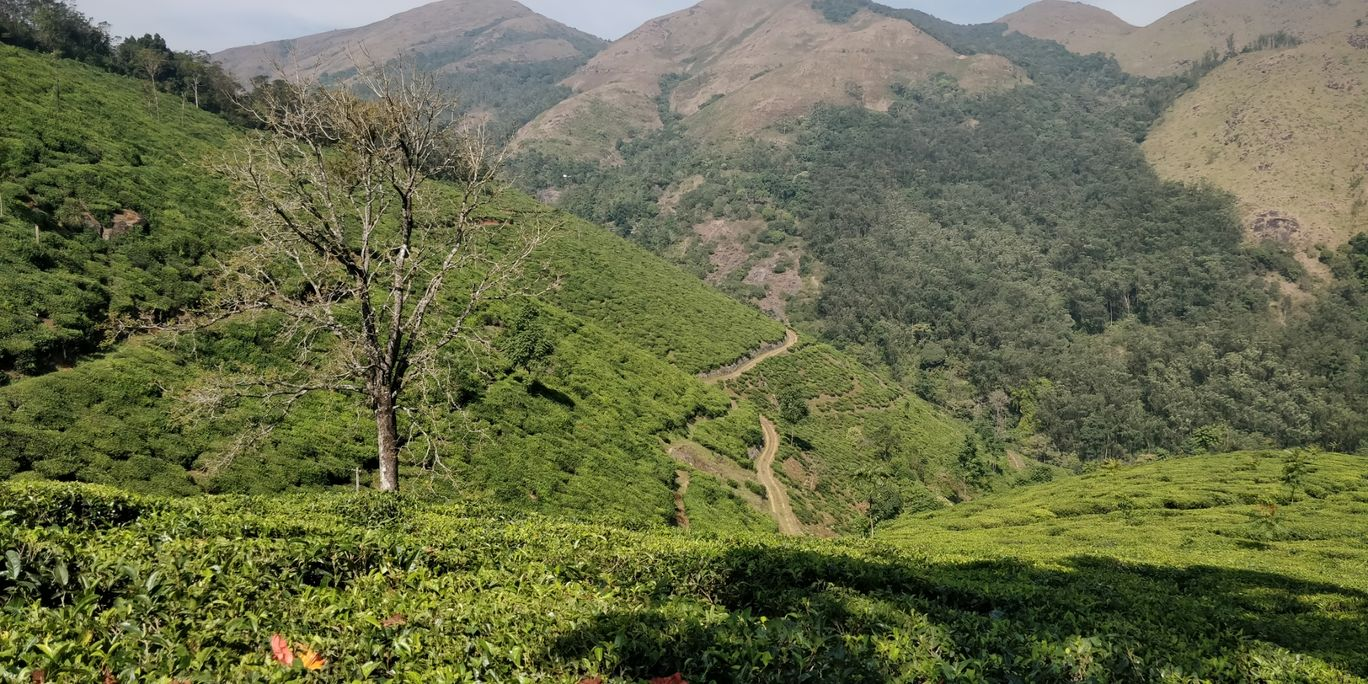 Photo of Woodlands Tea Estate By Ananth Nair