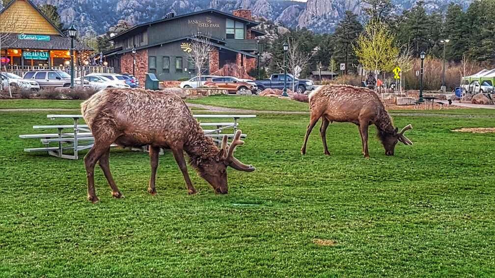 Photo of Estes Park By The Wayfarerz