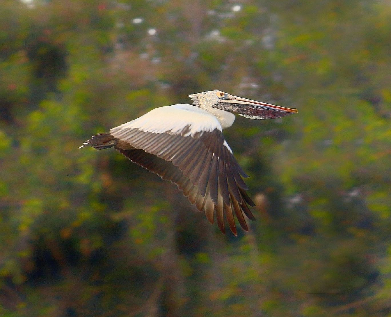 Photo of Ranganathittu Bird Sanctuary By Prema reddy