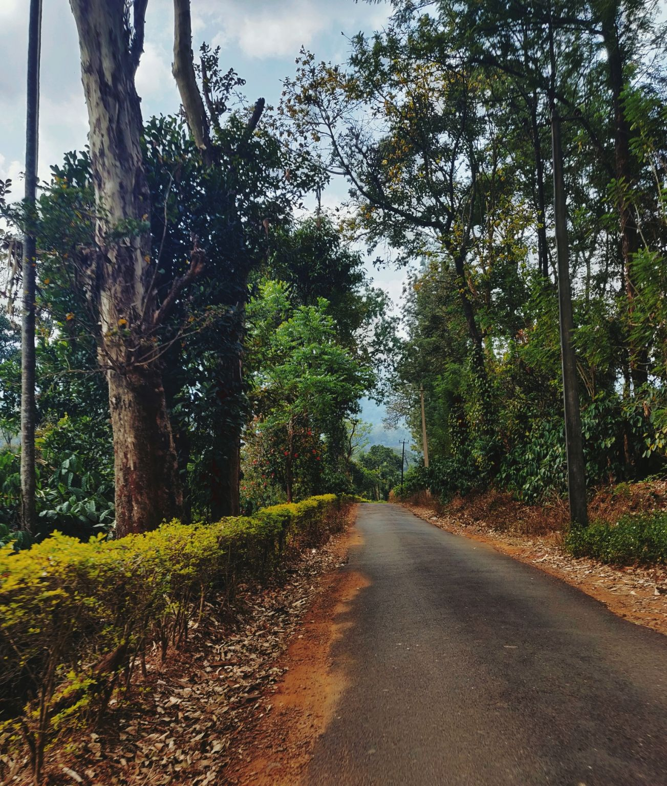 Photo of Coorg By Moumita Dey