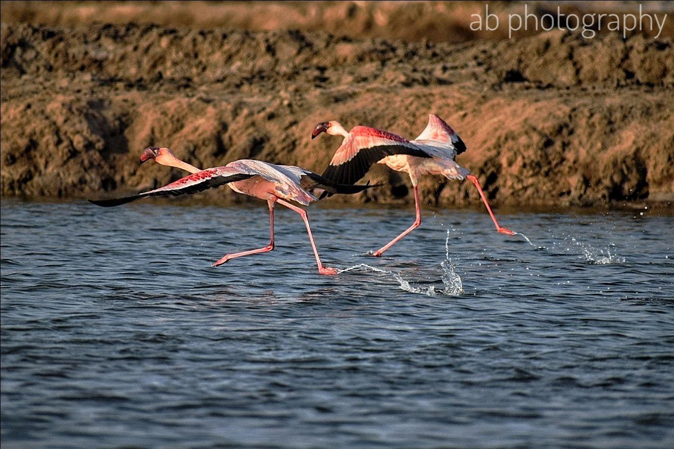 Photo of Jamnagar By Abhiraj Rathore
