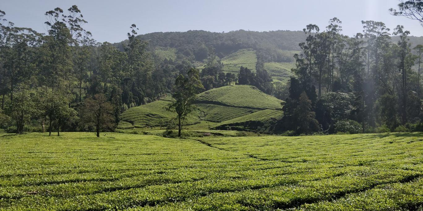 Photo of Megamalai Forest By JayaMani R