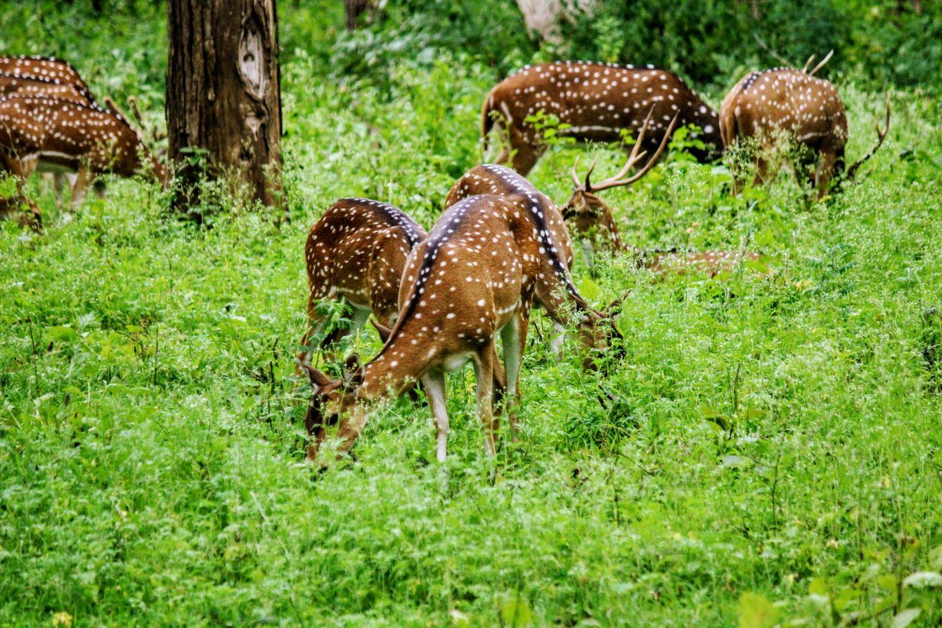 Photo of Karnataka By DIPIN DAS P