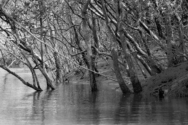 Photo of Sundarbans By Joydeep Bhattacharyya