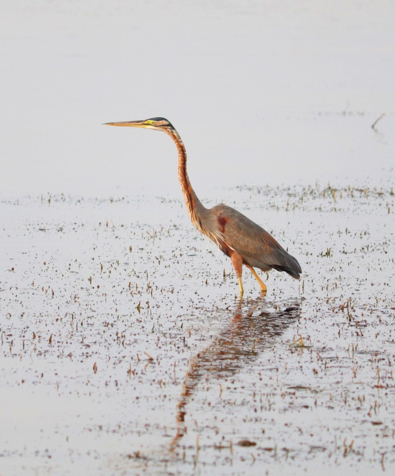 Photo of Osman Sagar By Sandeep Kr Yadav