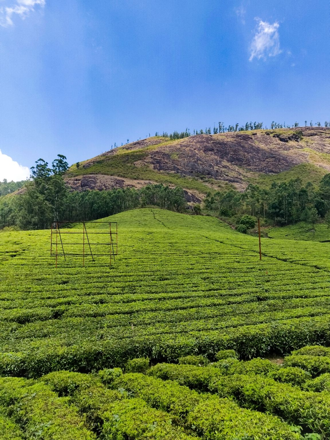 Photo of Munnar By Ajith Tolroy