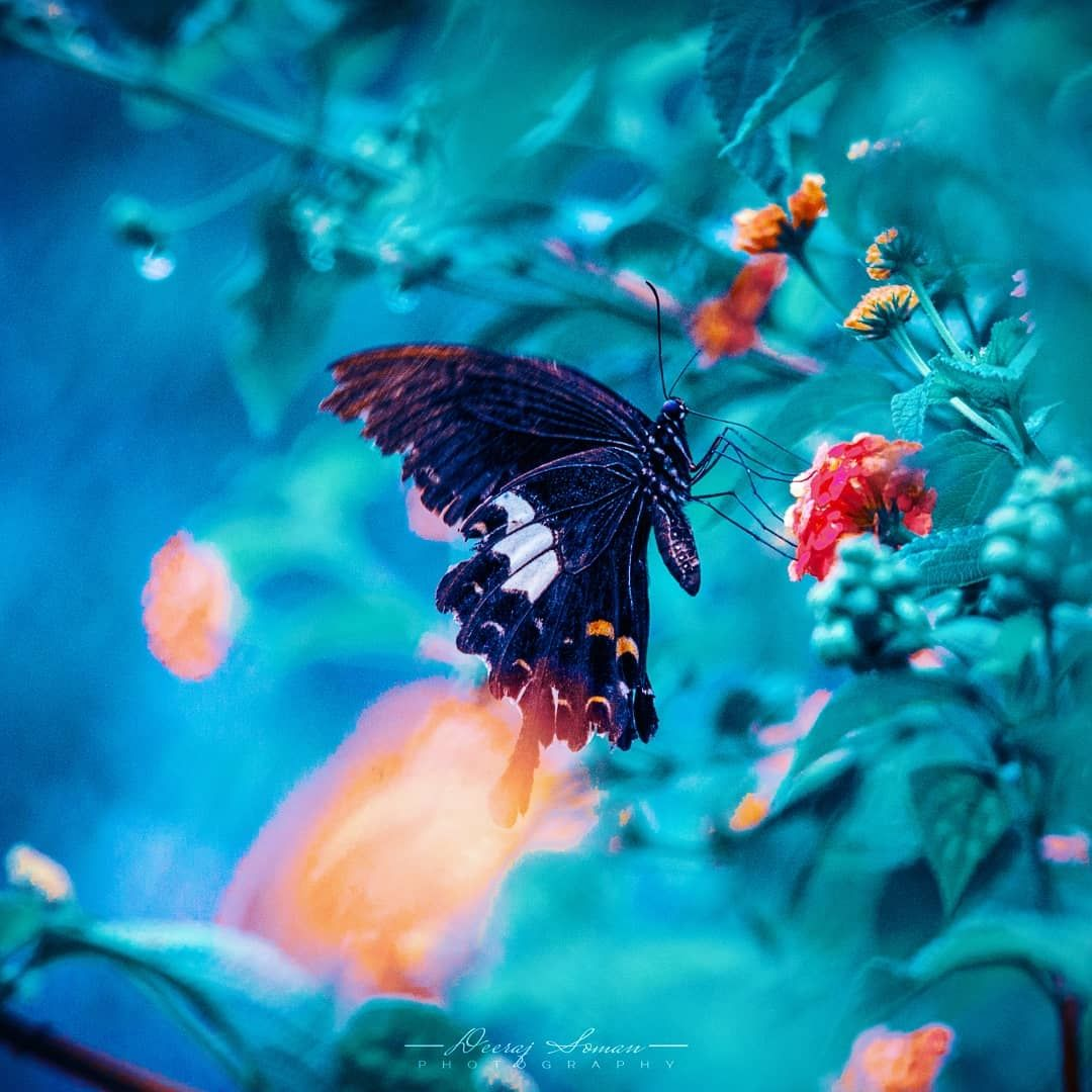 Photo of Ooty By Deeraj Soman