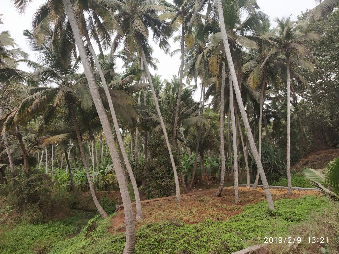 Photo of Kerala By Kirti Benal
