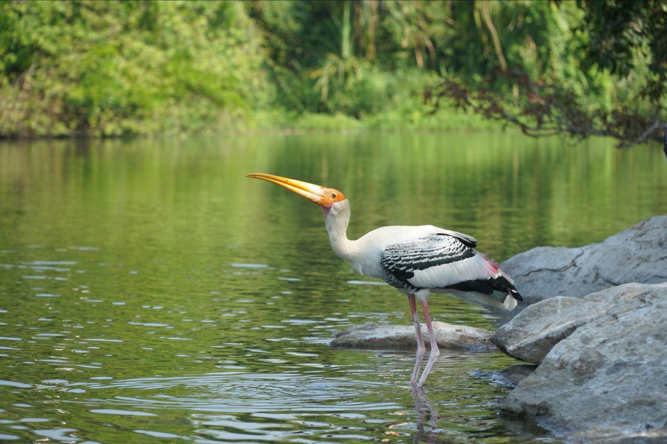 Photo of Ranganathittu Bird Sanctuary By Keshav Cb
