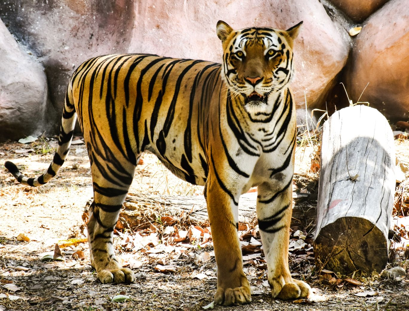 Photo of Bannerghatta National Park By Soumyaranjan Pati