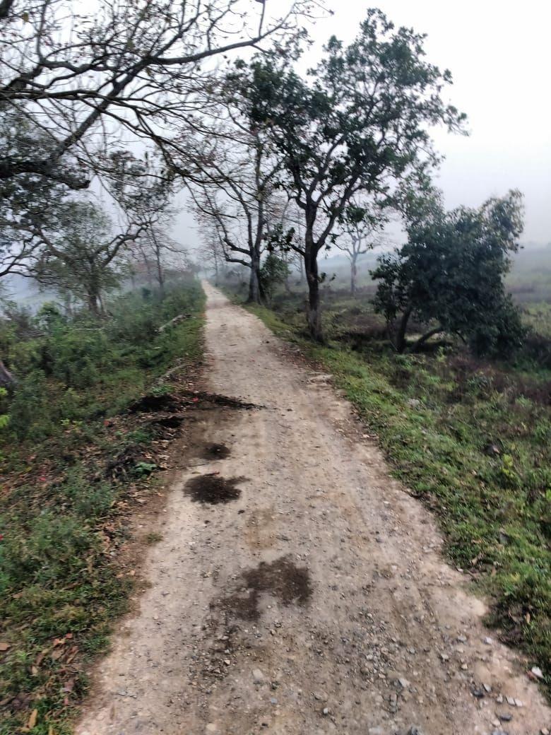 Photo of Kaziranga National Park By Bhaswati Koch