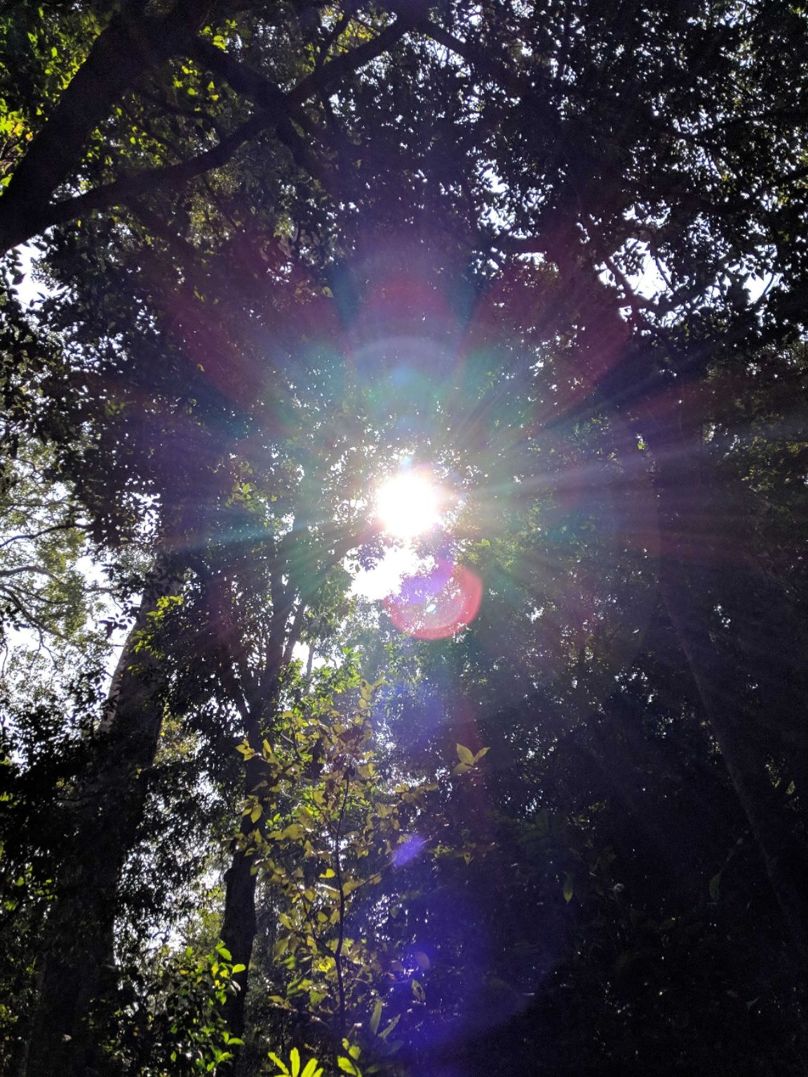 Photo of Nelliyampathy Forest Reserve By Gokul Kn