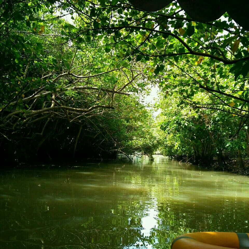 Photo of Kerala By Alipta