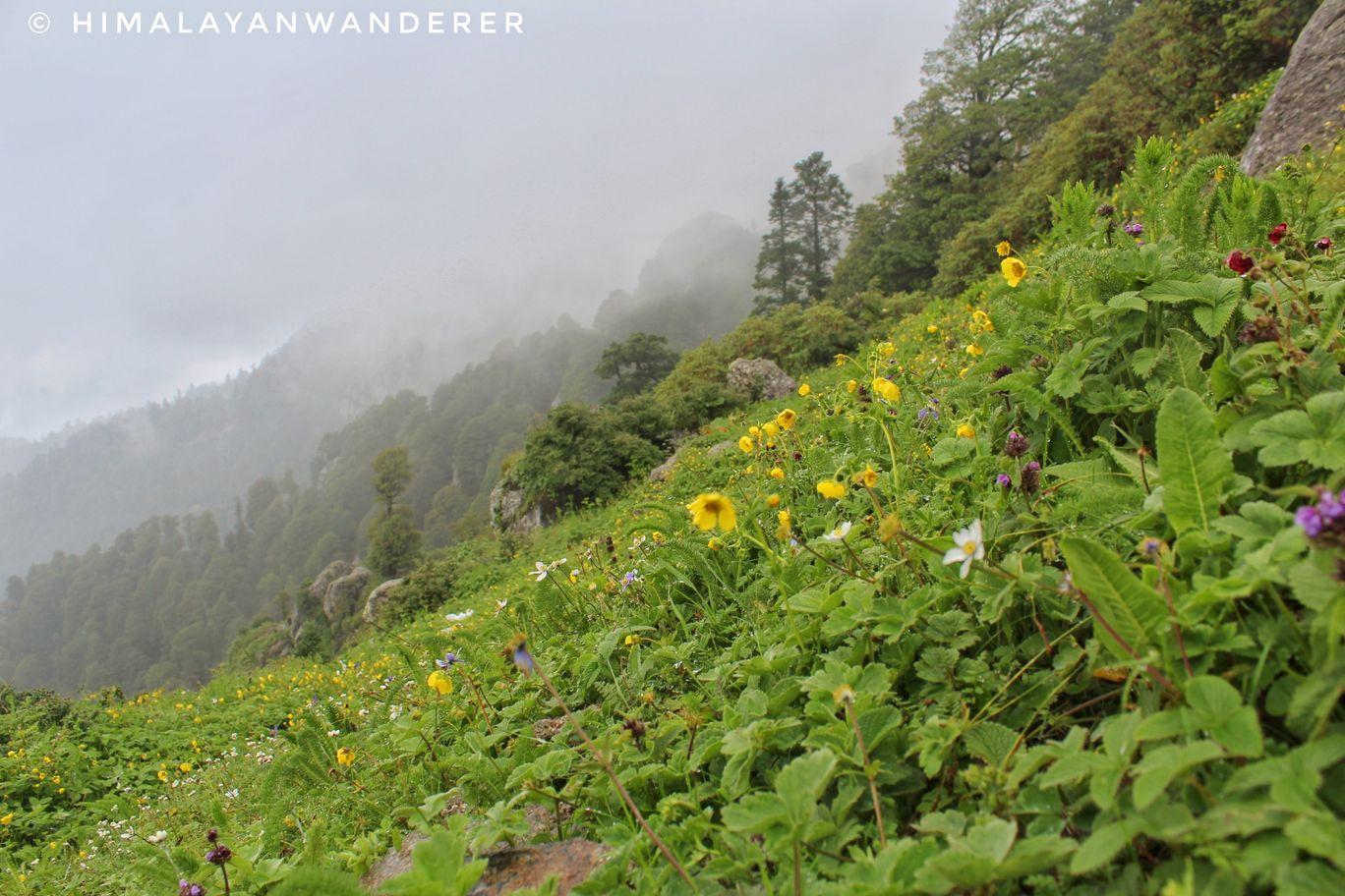 Photo of Churdhar By Himalayan Wanderer