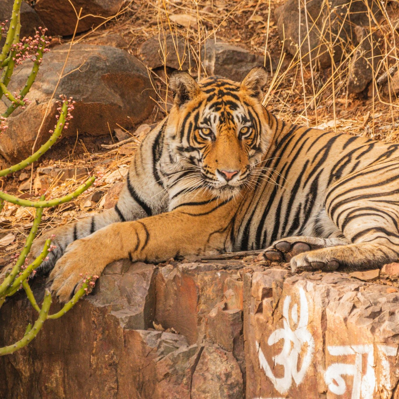 Photo of Ranthambore Tiger Reserve By Seelan's Photography