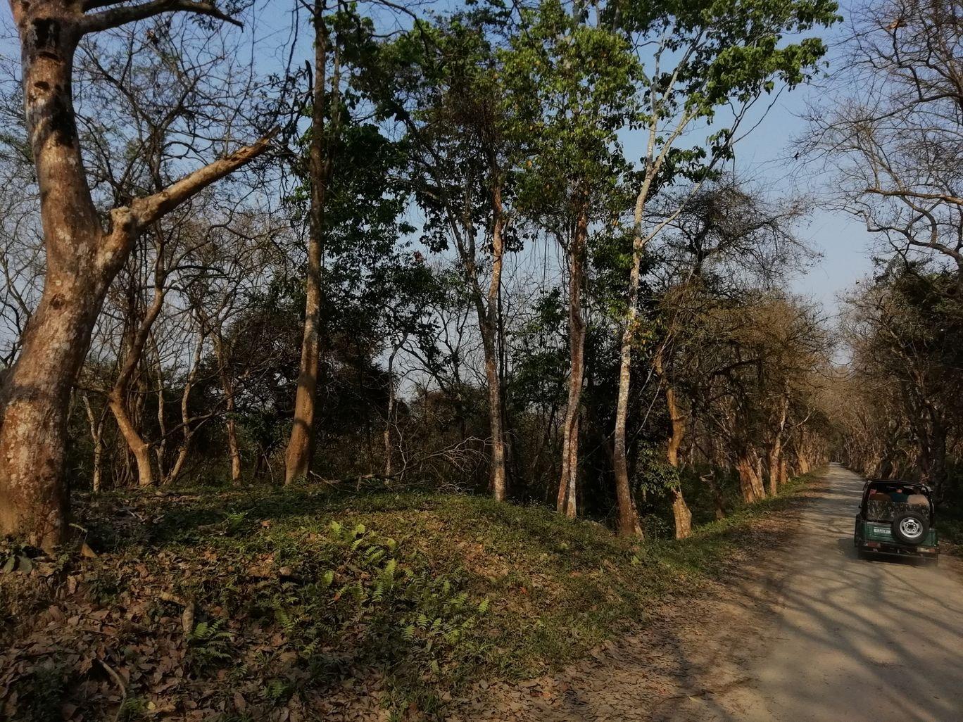Photo of Kaziranga National Park By Devarshi Talukdar