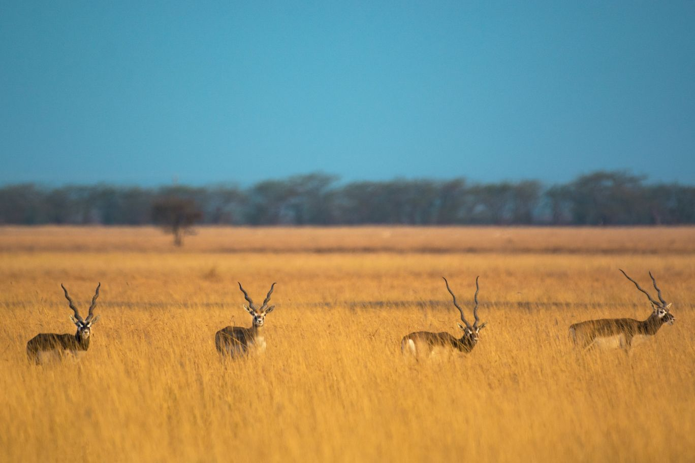 Photo of Blackbuck National Park By Manan Parekh