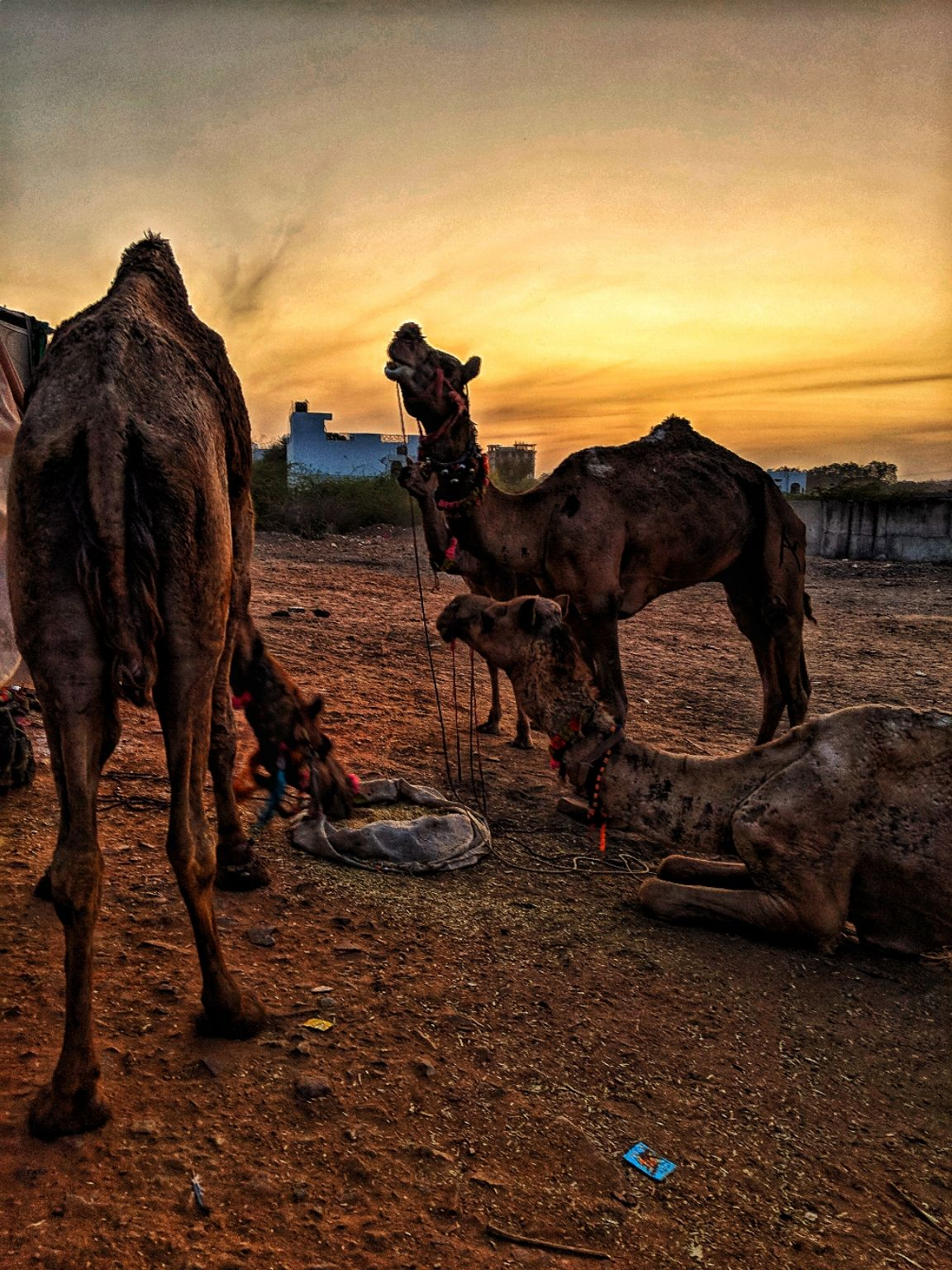 Photo of Pushkar By Aastha Thukral