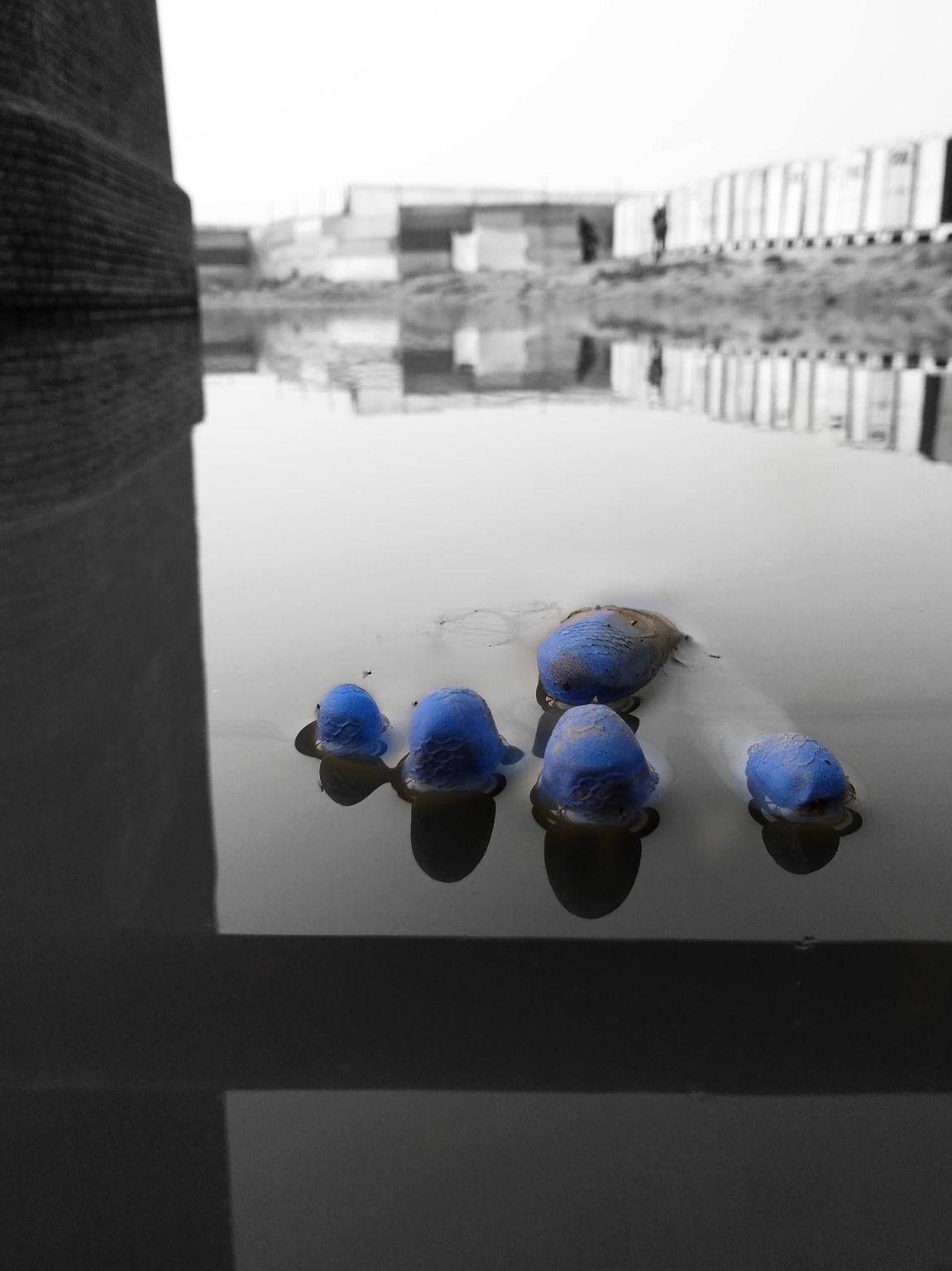 Photo of Allahabad By Rashid Khan