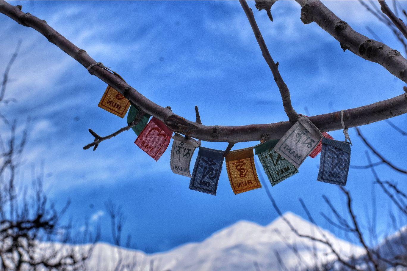 Photo of Dropout Adventures By शशांक चौहान