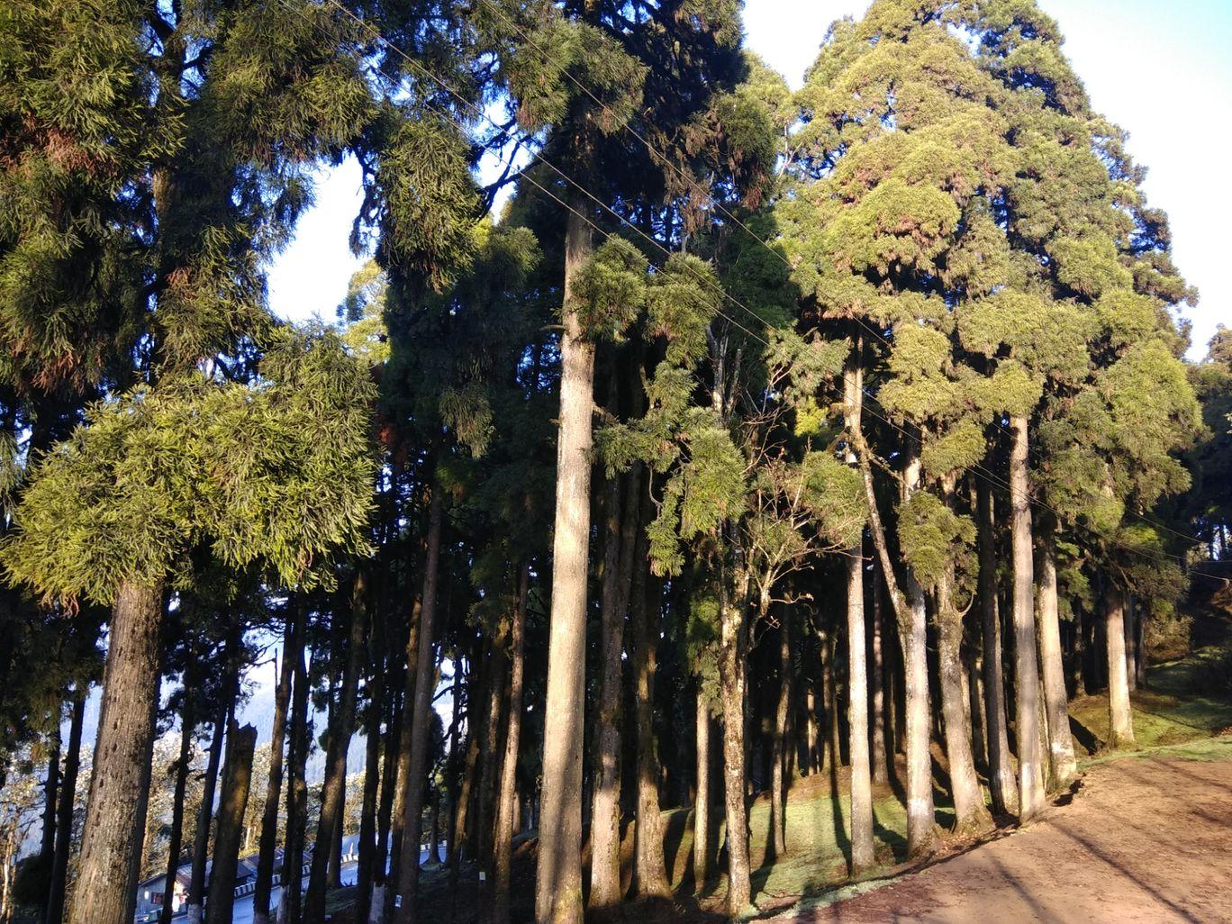 Photo of Darjeeling By Priyangi Chakrabarti