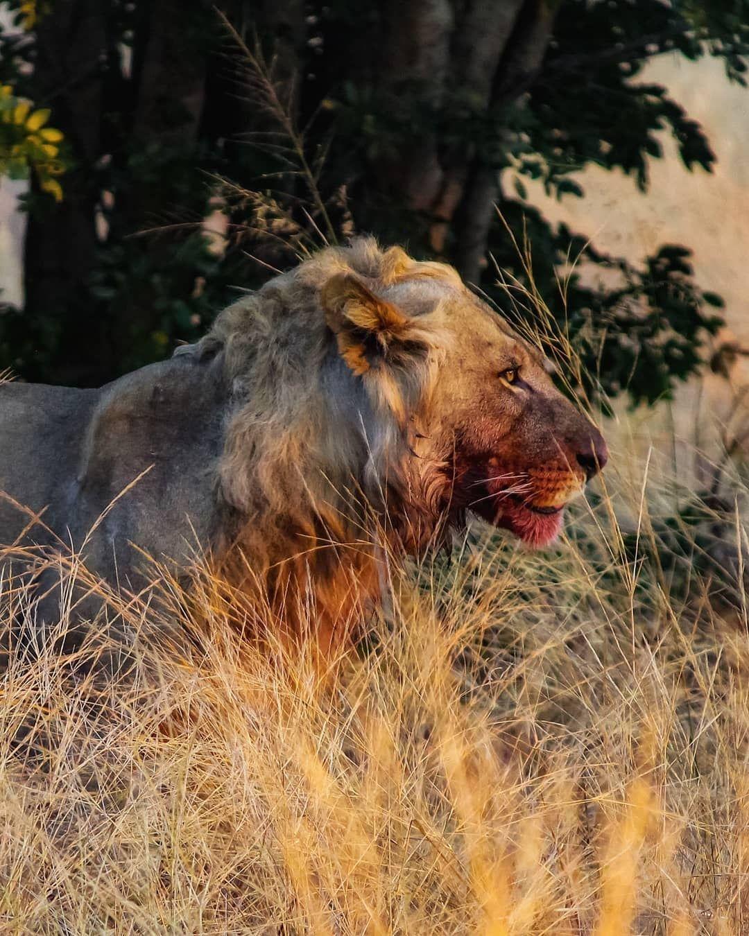 Photo of Botswana By iamrutulshah