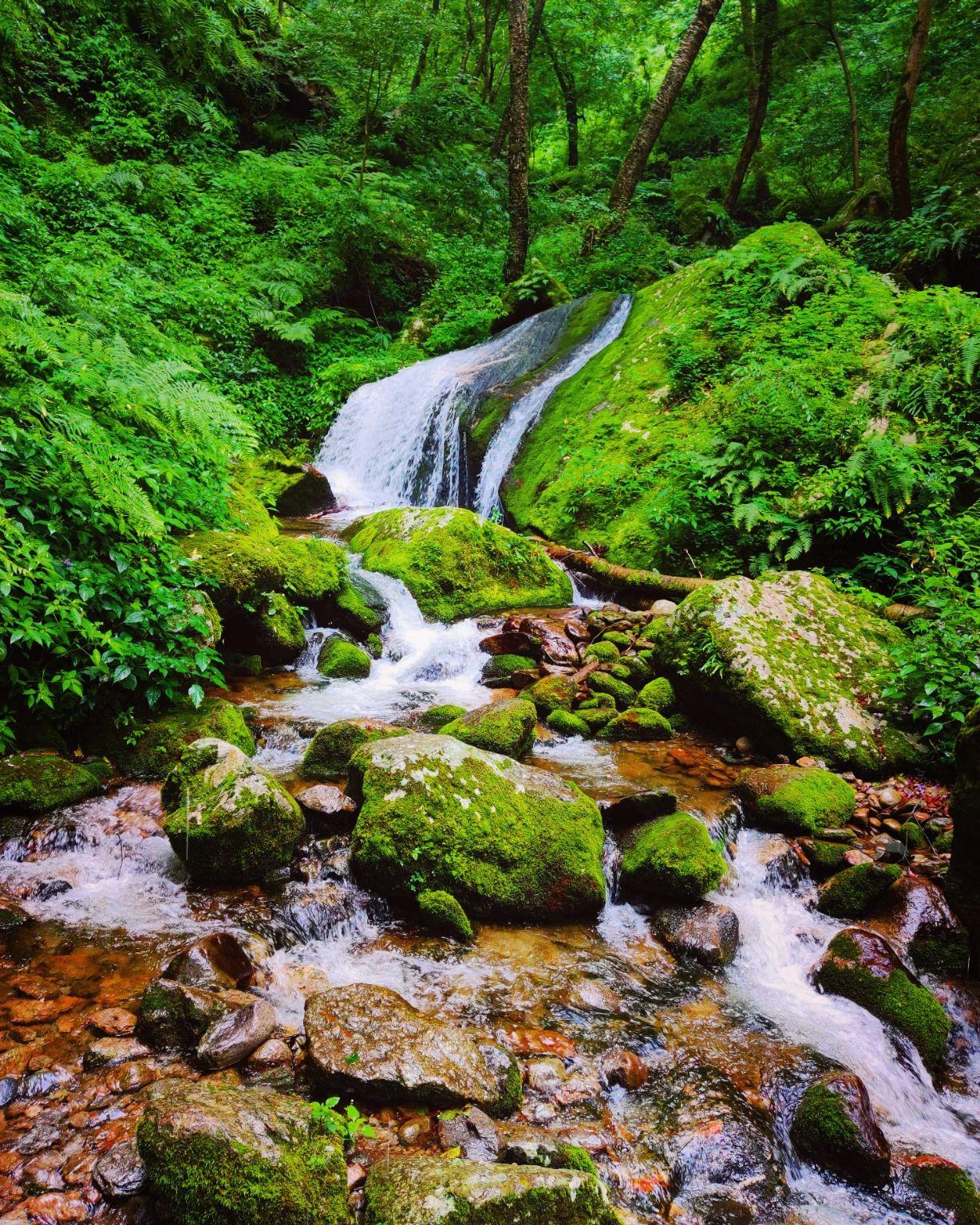 Photo of Tirthan Valley GHNP By DEEPAK CHHIKARA