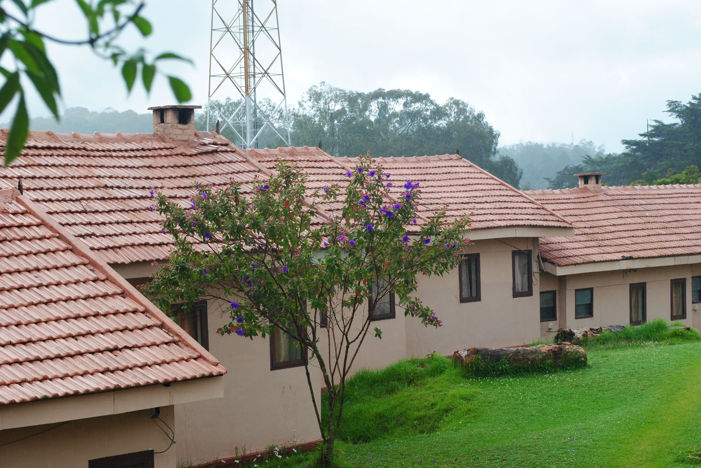 Photo of Ooty By Smriti Singh