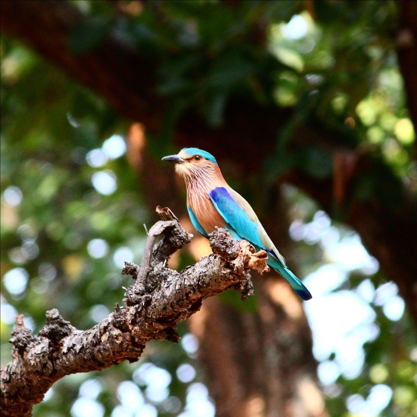 Photo of Bandhavgarh Tiger Reserve By Koustav Ray