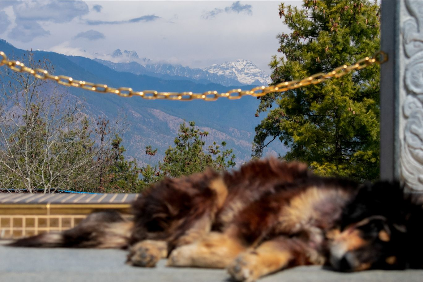 Photo of Thimphu By sourav dash