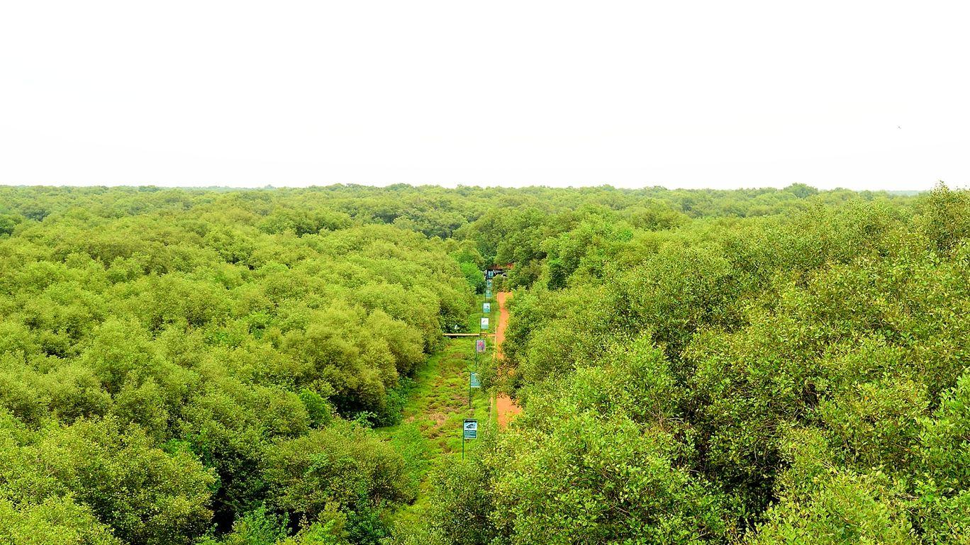 Photo of Coringa Wildlife Sanctuary By sandeep sunkara
