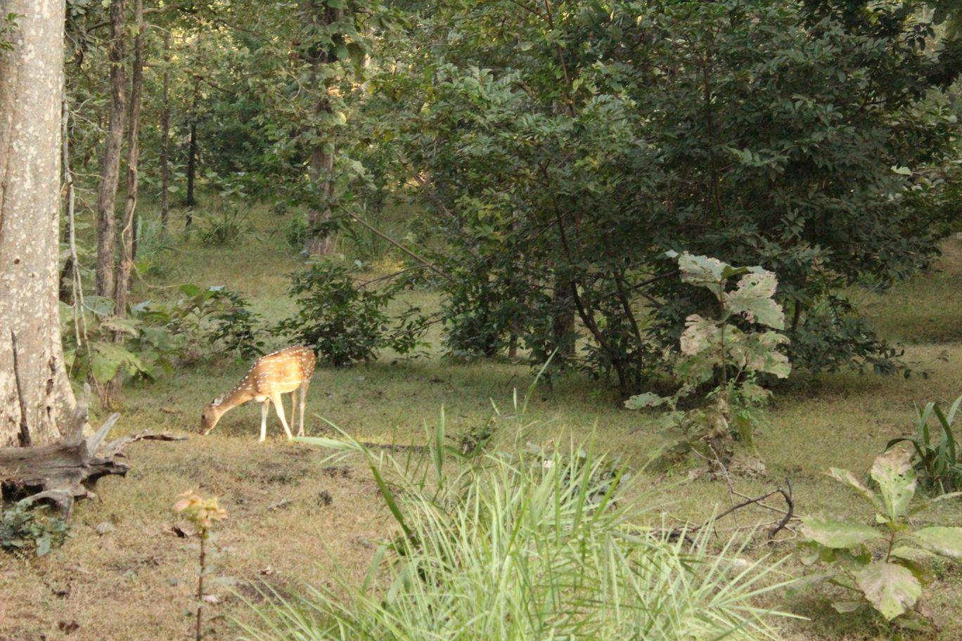Photo of Nagzira Tiger-Reserve- Guest House By Amit Belekar