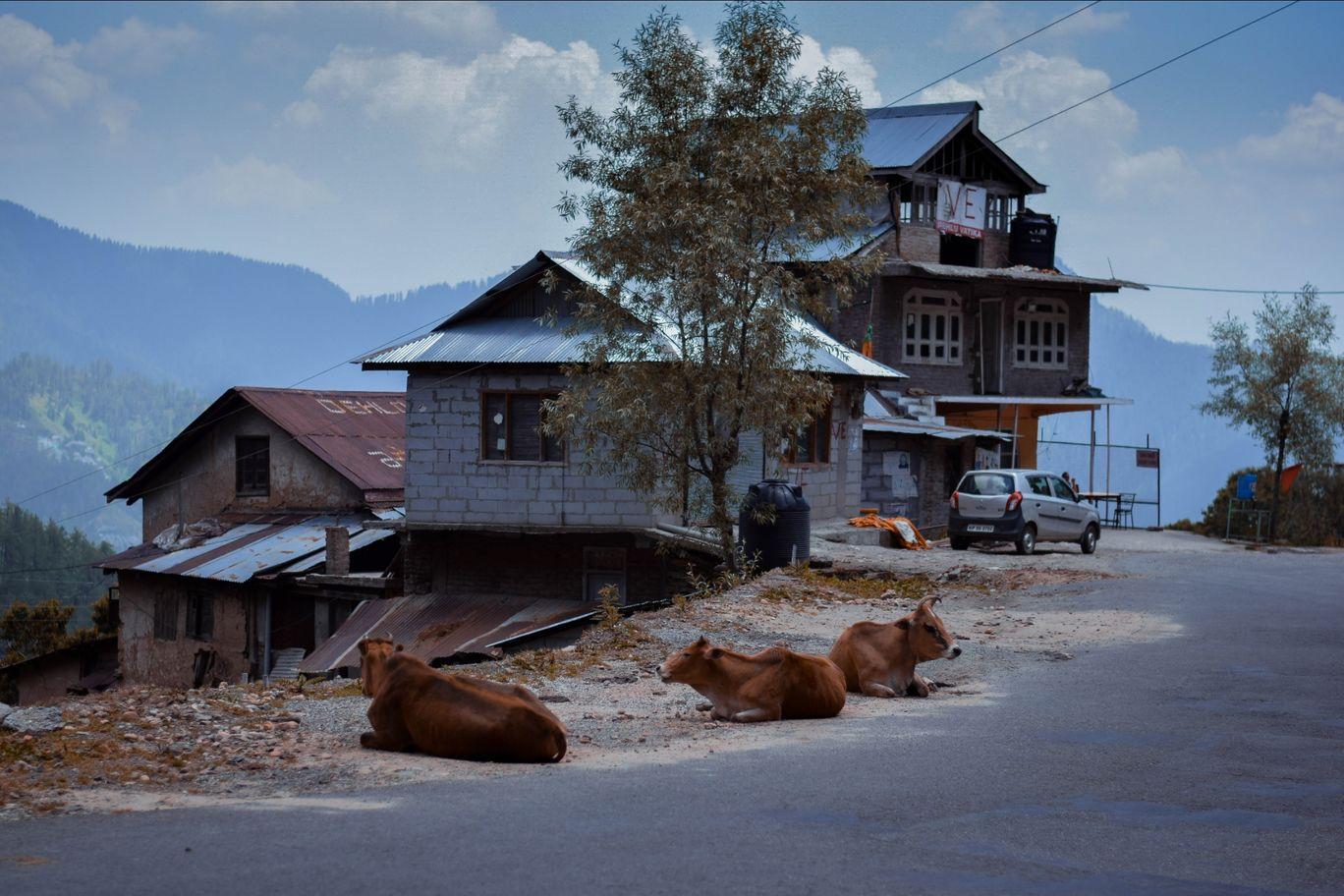 Photo of Shimla By anmolDoraha