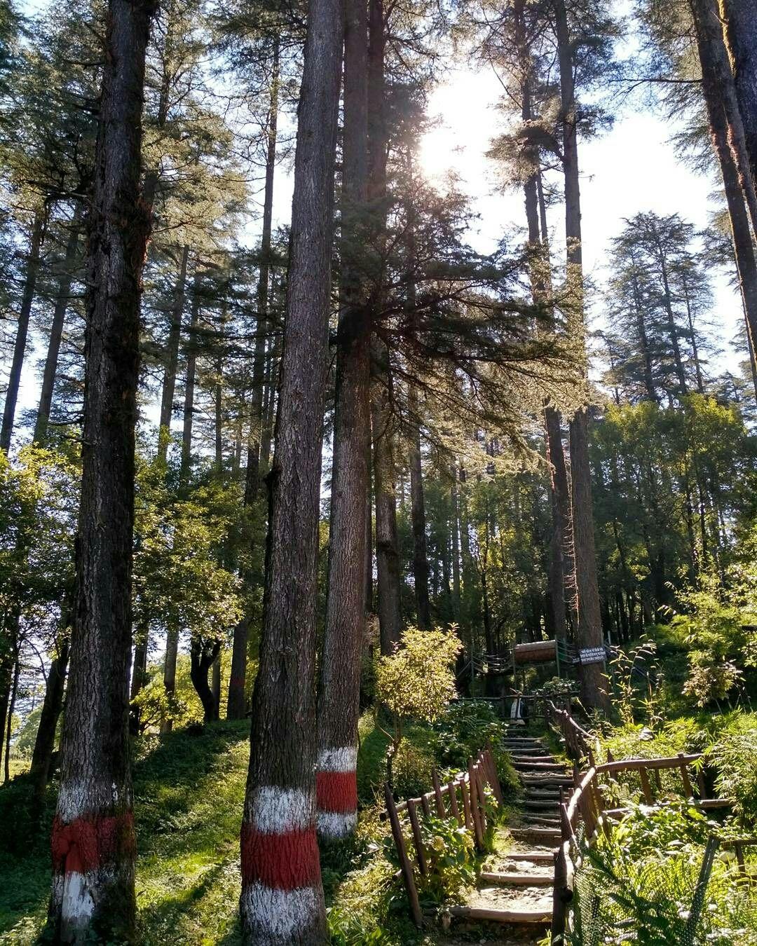 Photo of Dhanaulti Adventure Park near Mussoorie By Euidaimonia :)