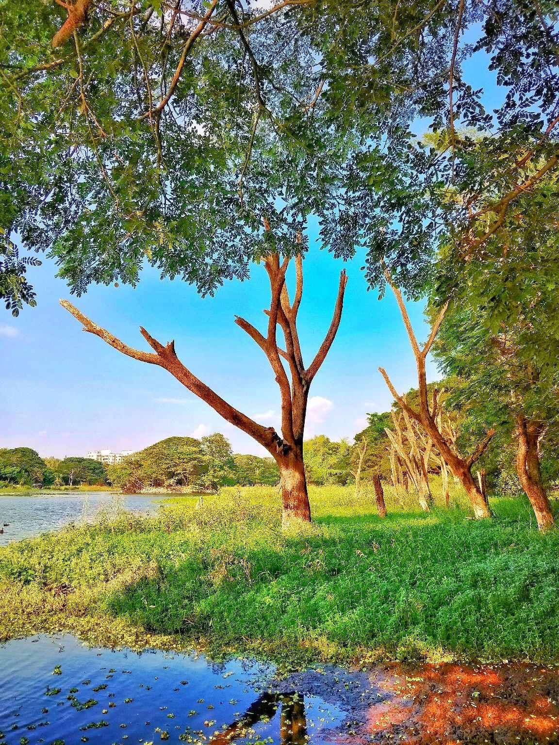 Photo of Wayanad By Saurabh Roy