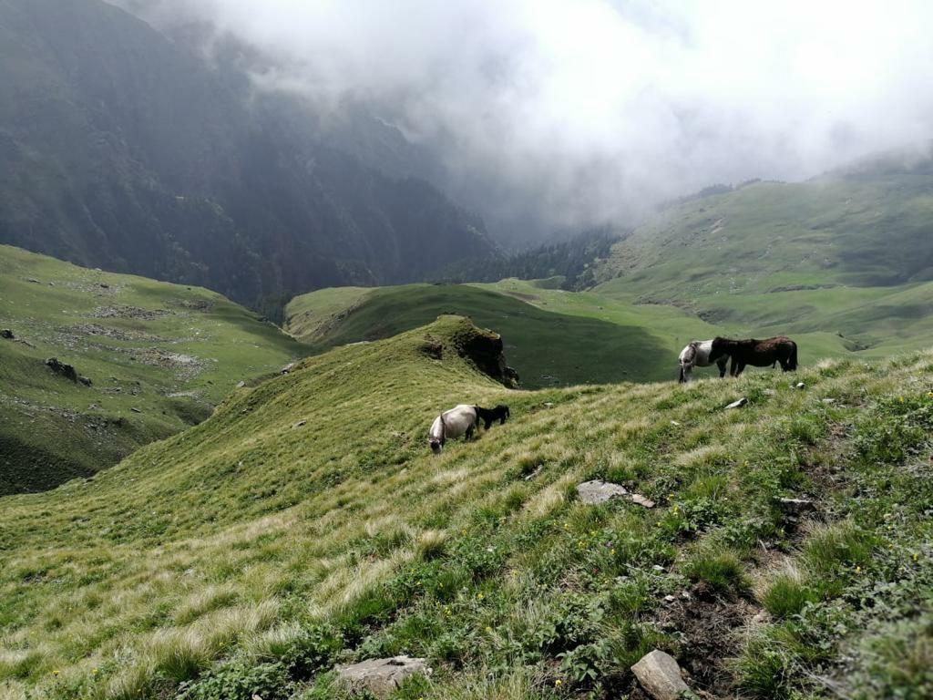 Photo of Himachal Pradesh By Prashant Chauhan