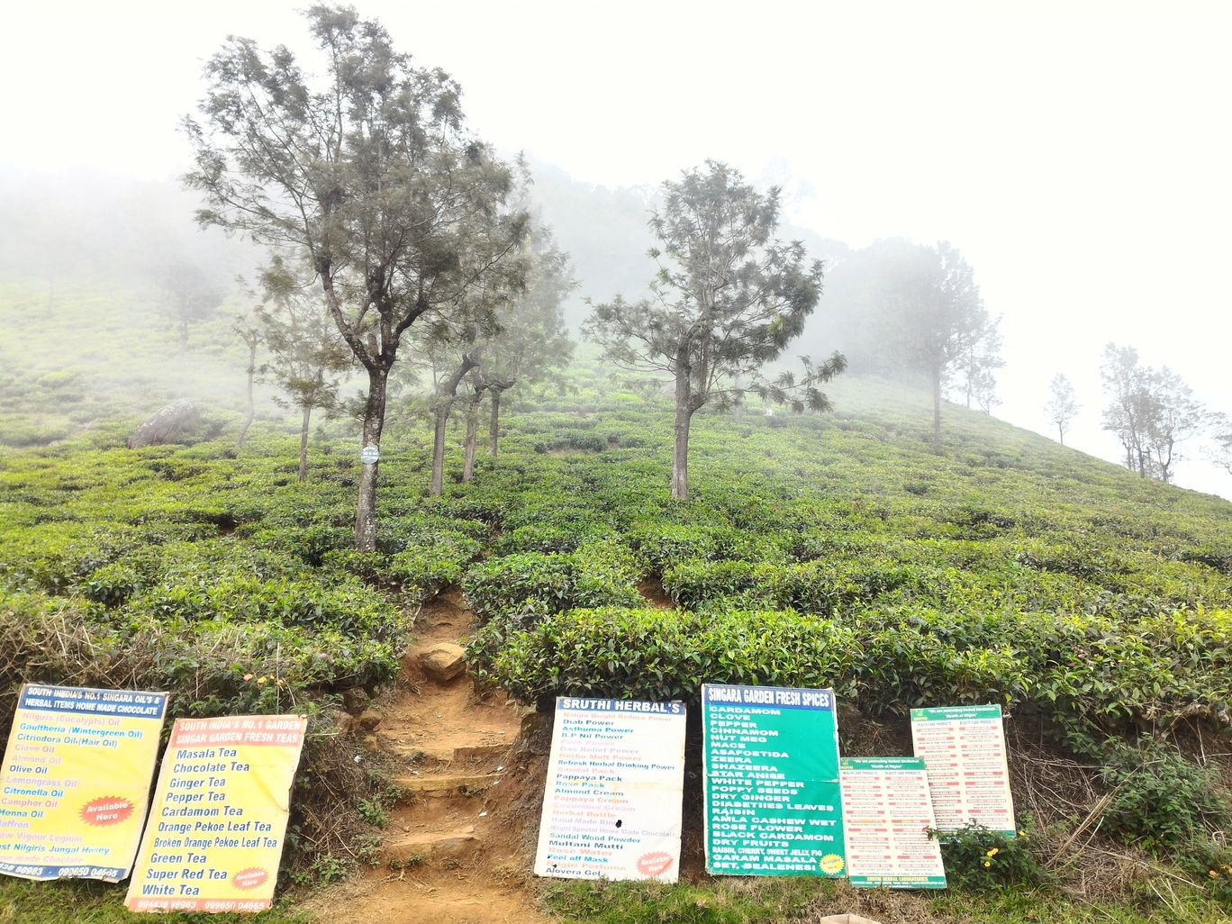 Photo of Ooty By Alakesh Dutta