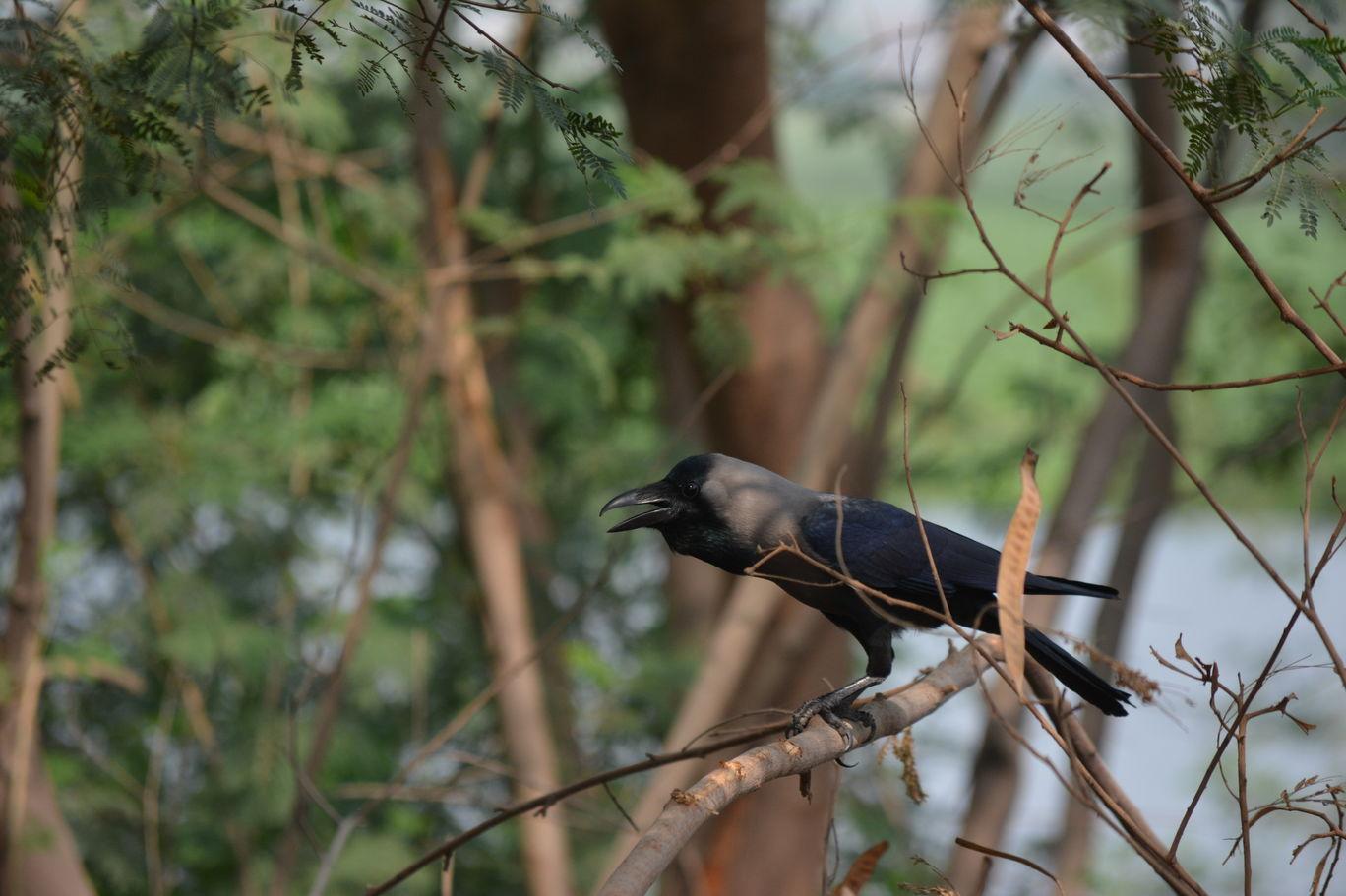 Photo of Okhla Bird Sanctuary By Pooja Runija