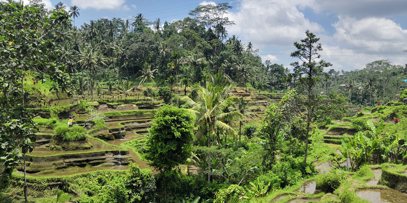 Photo of Tegalalang Rice Terrace By Offbeat Hippie