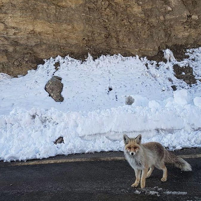 Photo of Ladakh By Fayroze