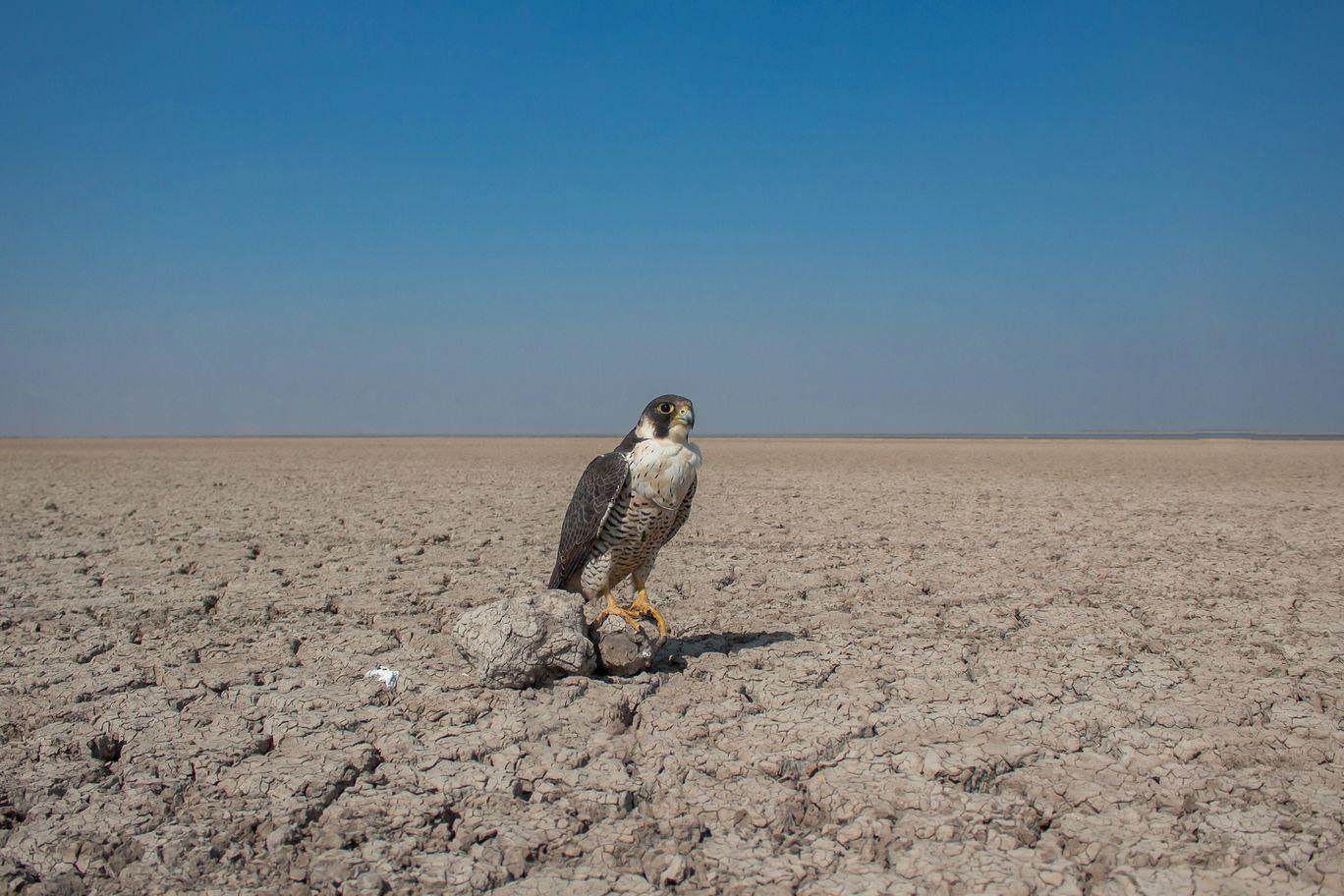 Photo of Little Rann of Kutch By Meet Thakkar