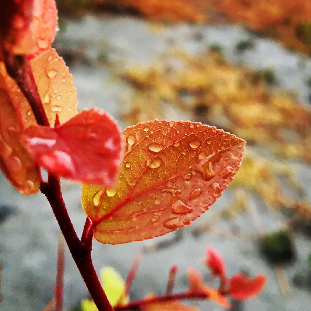 Photo of Beauty Of Nature After Heavy Rainfall By Thakur Rahul