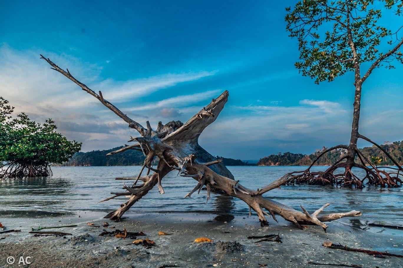 Photo of Wandoor By Abhishek Chatterjee